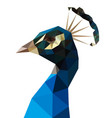 low polygon blue peacock isolated vector image