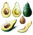 Watercolor avocado set vector image vector image