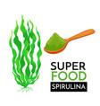 spirulina icon vector image vector image