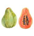 watercolor papaya set vector image vector image