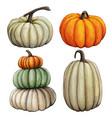 watercolor hand drawn fall pumpkin composition vector image vector image