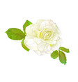 white rose simple stem with leaves watercolor vector image vector image