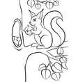 Little cute squirrel with huzelnut vector image