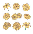 drawn set of yellow rose lily peony flowers vector image vector image