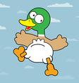 Mallard Duck vector image