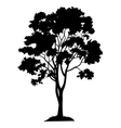 Maple tree and grass silhouette vector image vector image
