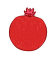 colored sketch style fruit red pomegranate vector image