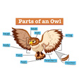 Diagram showing parts of owl vector image vector image