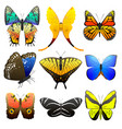 different butterfly with abstract decorative vector image vector image