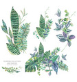 green exotic leaves greenery botanical vector image vector image
