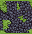 seamless pattern background with black grapes vector image