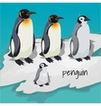 Three big penguins and one little penguin vector image vector image