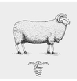 sheep engraved hand drawn in vector image