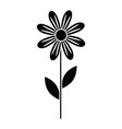 beauty sunflower isolated icon vector image