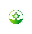 green tree plant bio organic seed logo vector image vector image
