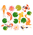 koi carp fishes set swimming colorful goldfish vector image vector image