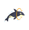 orca jumping through a ring sea animal performing vector image vector image
