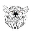 sketch head bear vector image vector image