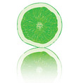 citrus texture background with slices of lemon vector image vector image