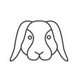 dwarf rabbit linear icon vector image