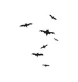 Flock of bats isolated on white background vector image