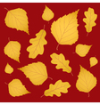 Background of gold birch and oak leaves vector image vector image