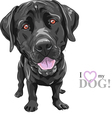 black dog breed Labrador Retriever vector image vector image