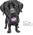 black dog breed Labrador Retriever vector image vector image
