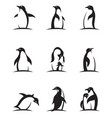 penguin icon set vector image vector image