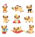 set images cute puppies vector image vector image