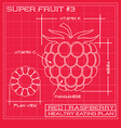 Blueprint diagram line drawing of a raspberry vector image vector image