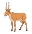 color with saiga antelope vector image vector image