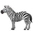 happy zebra cartoon isolated on white background vector image