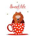 sweet life cute cartoon bear character sit in mug vector image
