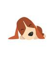 beagle dog sleeping cute funny animal cartoon vector image