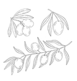 Branch of olive tree on a white background vector image vector image