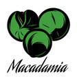 color a macadamia pod vector image