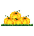 isolated pumpkin on white background vector image