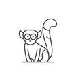 lemur line icon concept lemur linear vector image vector image
