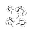 hand drawn cotton cotton flower buds in vector image