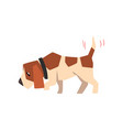 beagle dog searching for a trace and wagging its vector image vector image
