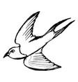 flying swallow bird vector image vector image