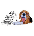 life is better with a beagle dog with text on vector image vector image