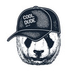 tattooed panda hipster boy vector image