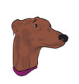 dog portrait profile look down vector image