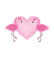exotic birds love flamingo couple beautiful pink vector image