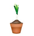 Fresh Green Leek in Ceramic Flower Pots vector image vector image