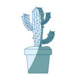 blue shading silhouette with cactus of three vector image vector image