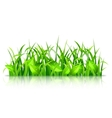 Green Grass and Leaves vector image
