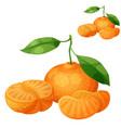 tangerine fruit mandarin cartoon icon vector image
